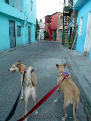 Buenagente and Inteliperra walking the narrow Calles and Callejons of El Pensador, Los Mameyes, Santo Domingo Este.