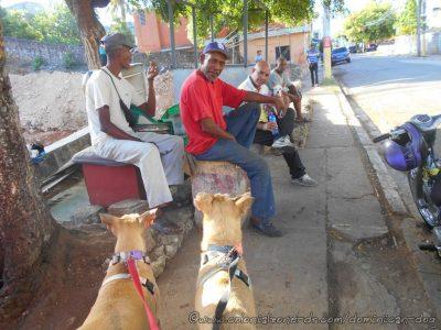 Inteliperra and Buenagente visiting Shoe Man and Tutu, the  chicuahua.  El Pensador, Los Mameyes, Santo Domingo Este.