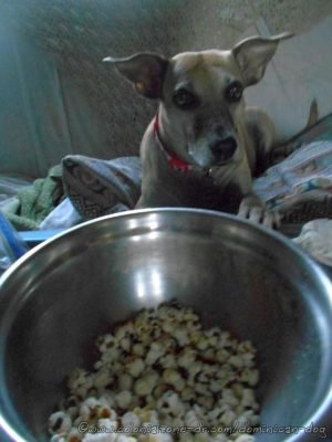 Inteliperra is tired of waiting. She is now DEMANDING some popcorn.
