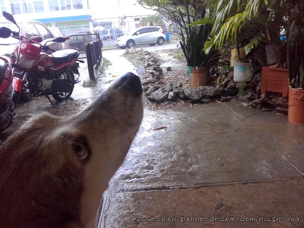Buenagente making sure momma knows the rain has stopped and he wants to head out again
