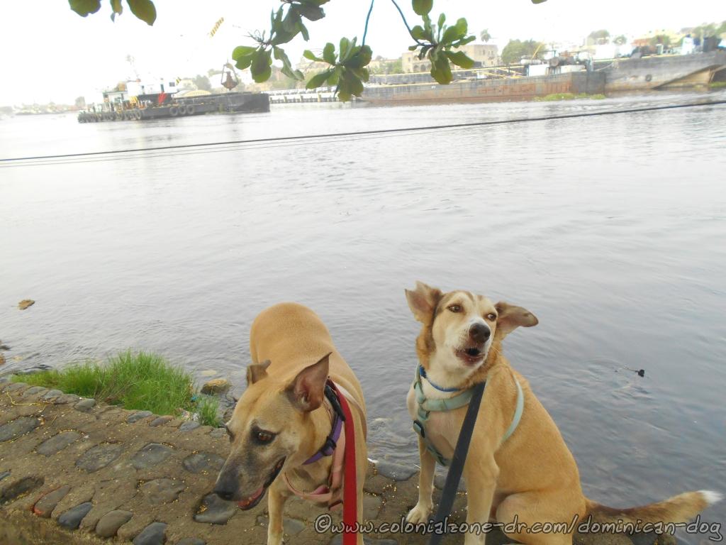 Inteliperra & Buenagente hanging out at Rio Ozama.