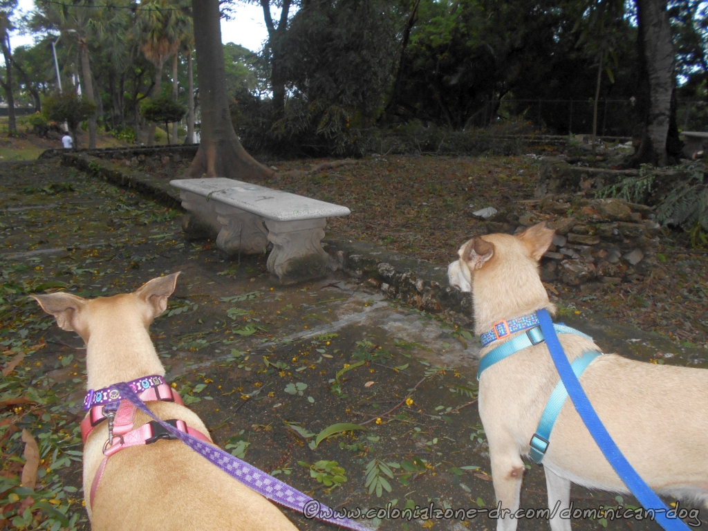 Buenagente and Inteliperra checking out the damage after Hurricane Irma