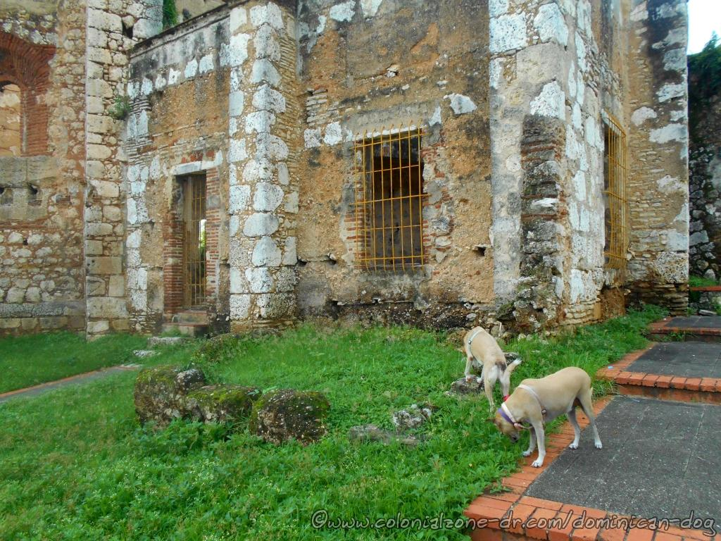 Buenagente and Inteliperra are sniffing around the Ruinas del Monasterio de San Francisco seeing if they recognise any of the dogs that passed here earlier.