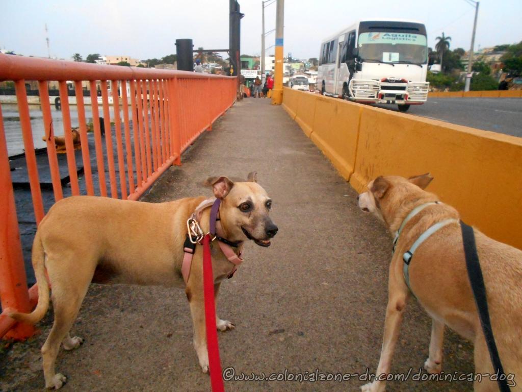 Inteliperra and Buenagente are crossing the Puente Flotante over the Rio Ozama heading to
