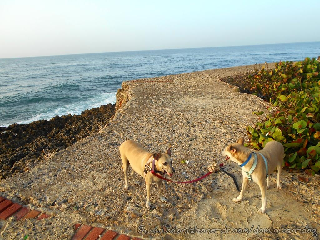 Inteliperra and Buenagente are on some of the old walkways at Punta Torrecilla enjoying the breezes coming from the Caribbean Sea.
