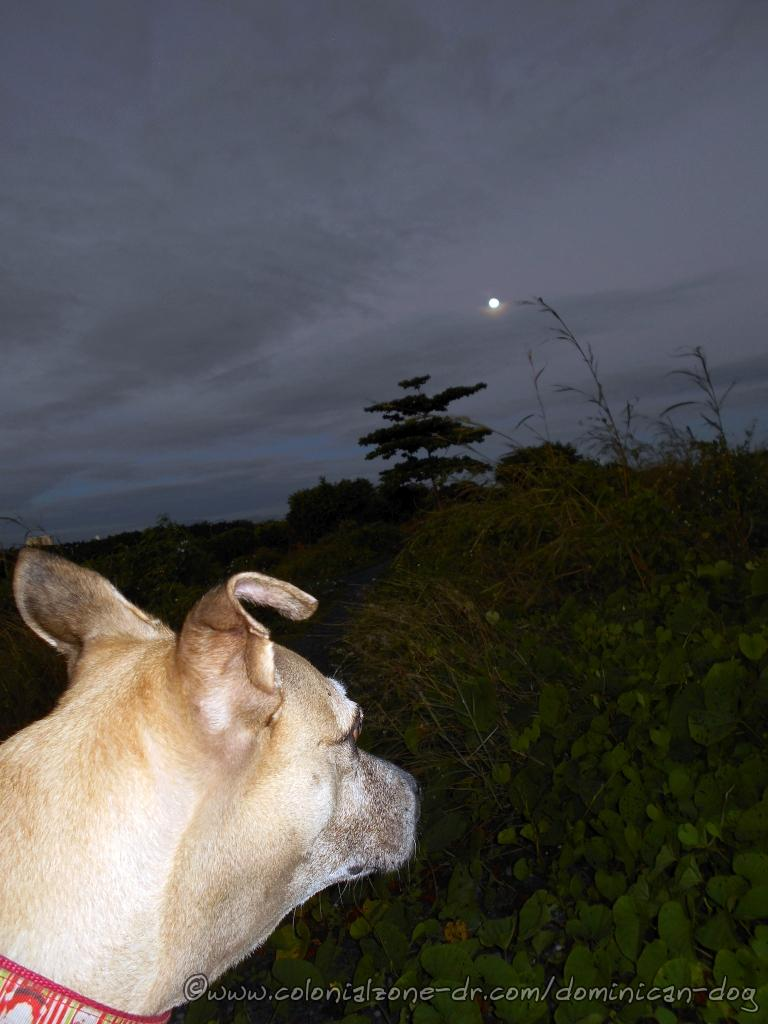 Inteliperra doing some moon gazing and admiring that beautiful bright, perfectly round moon.