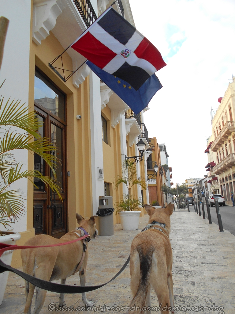 Inteliperra and Buenagente under the Dominican Republic Flag on Calle Arz. Meriño in the Colonial Zone