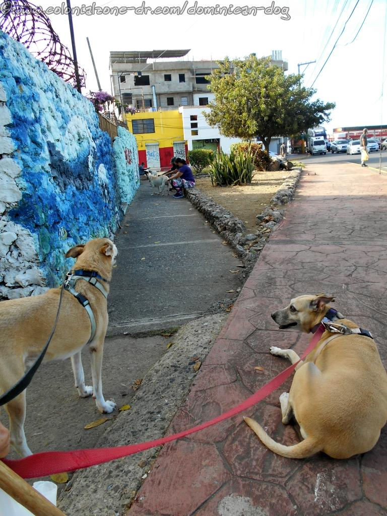 Waiting outside Manati Veterinarians for my appointment
