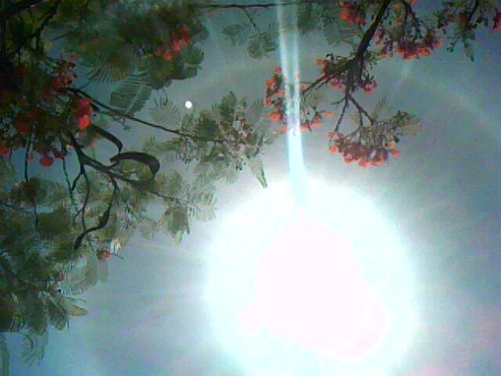 Halo rainbow through the flamboyant tree on Billy Jays birthday. (edited image)