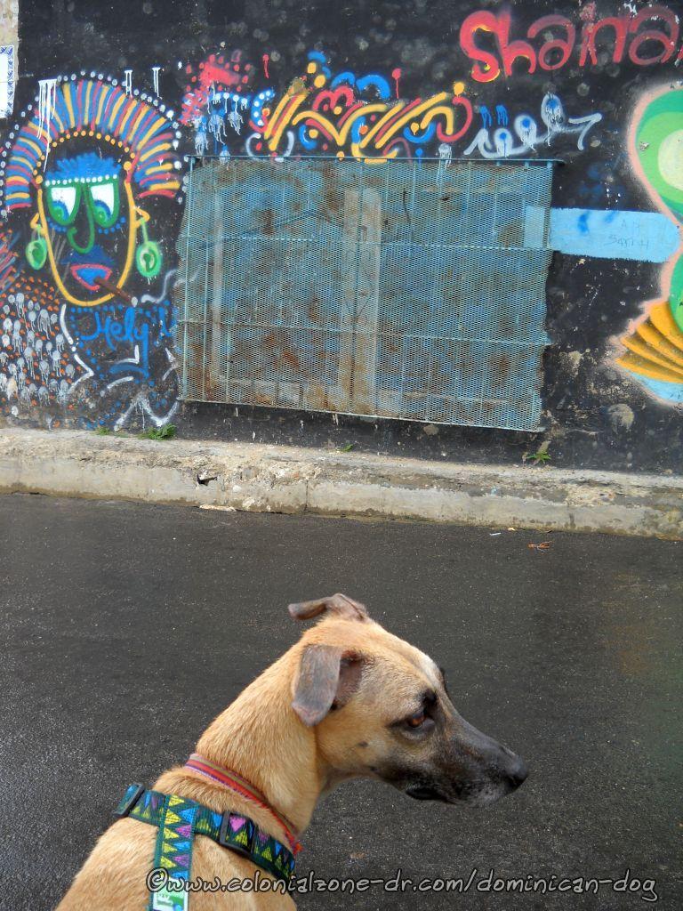 Calle General Cabral nice graffiti
