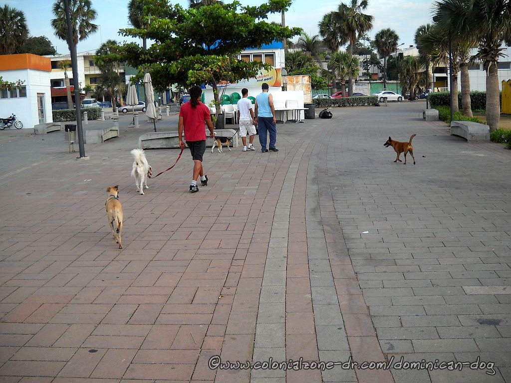 The 3 Dogeteers plus 1 walking around Plaza Juan Baron in the morning.