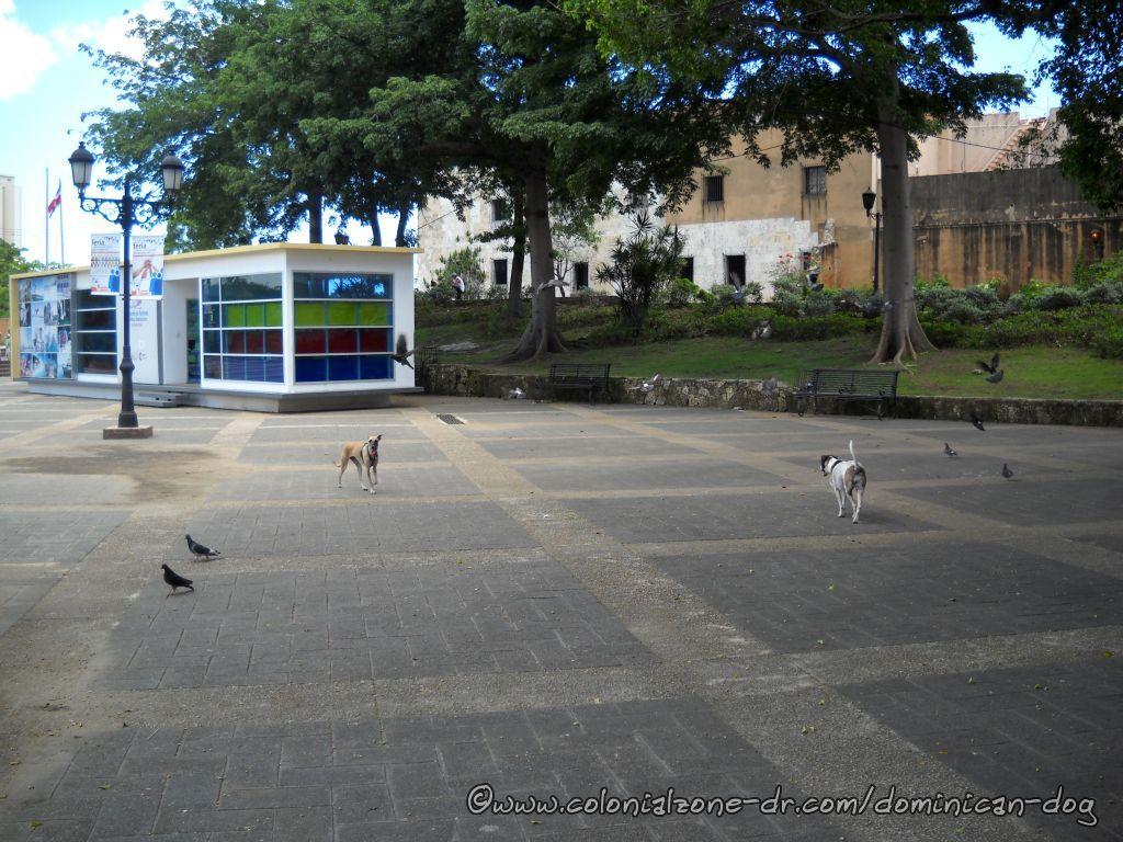 Teli and Bertha chasing pigeons at Plaza Espana
