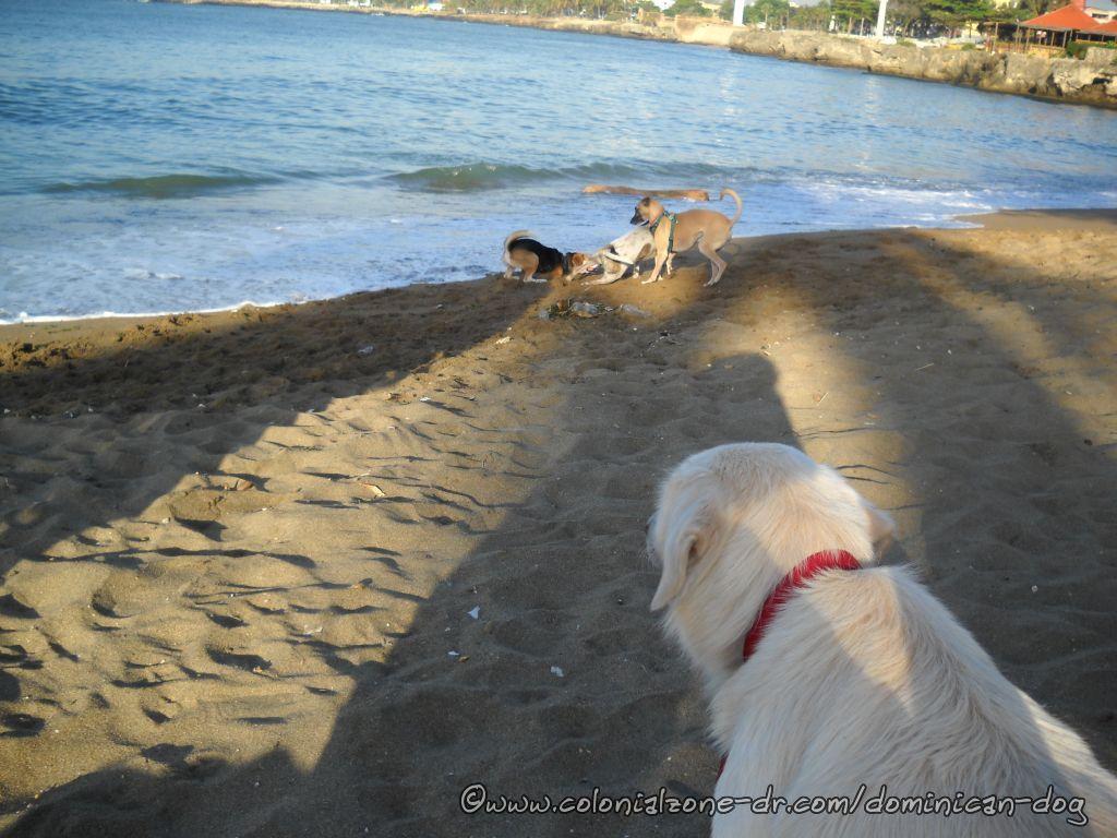 Teli, Blanco, Lula and Bertha  - The 3 Dogeteers plus 1 on the Playita Montecino