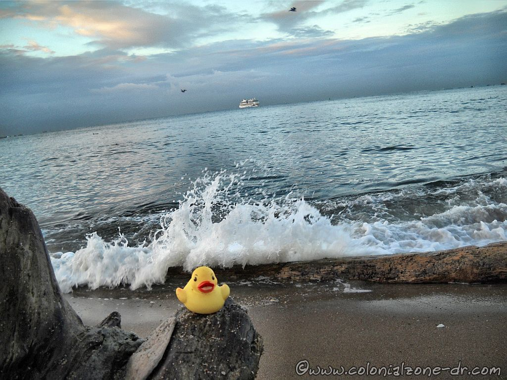 Baby rubber duckie enjoying the waves on the beach