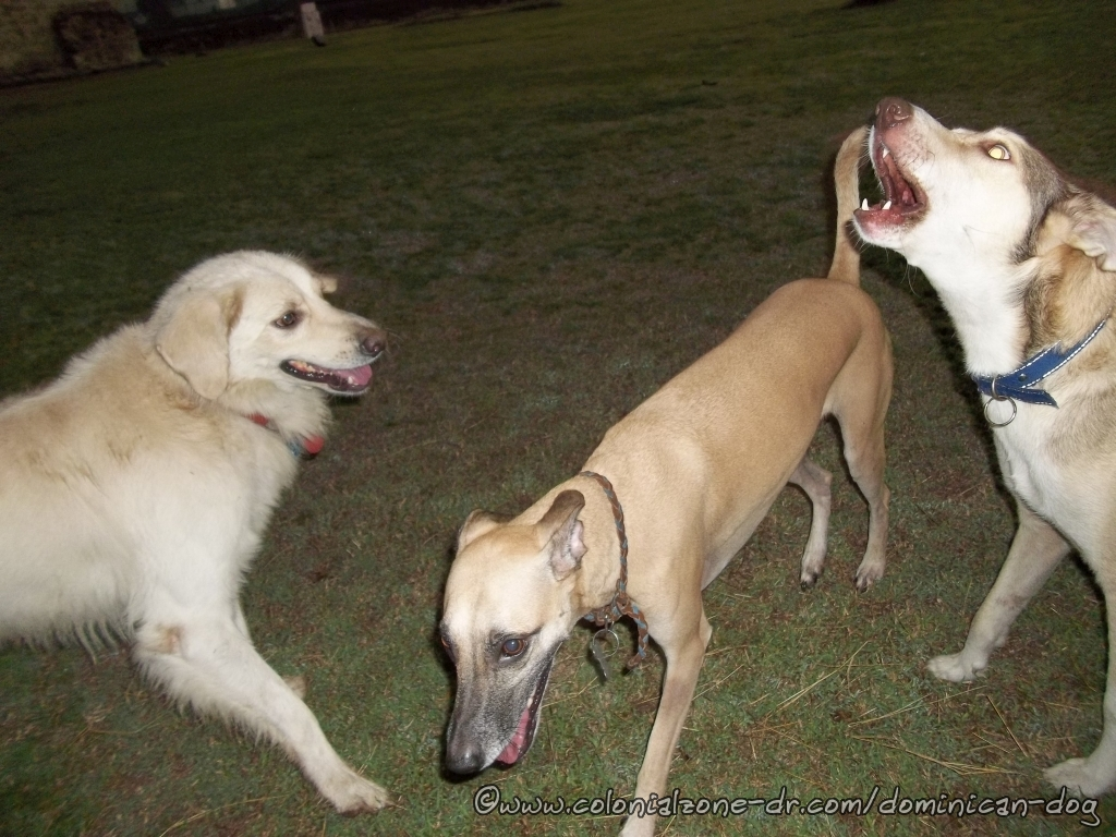 Teli, Buenagente and Blanco playing