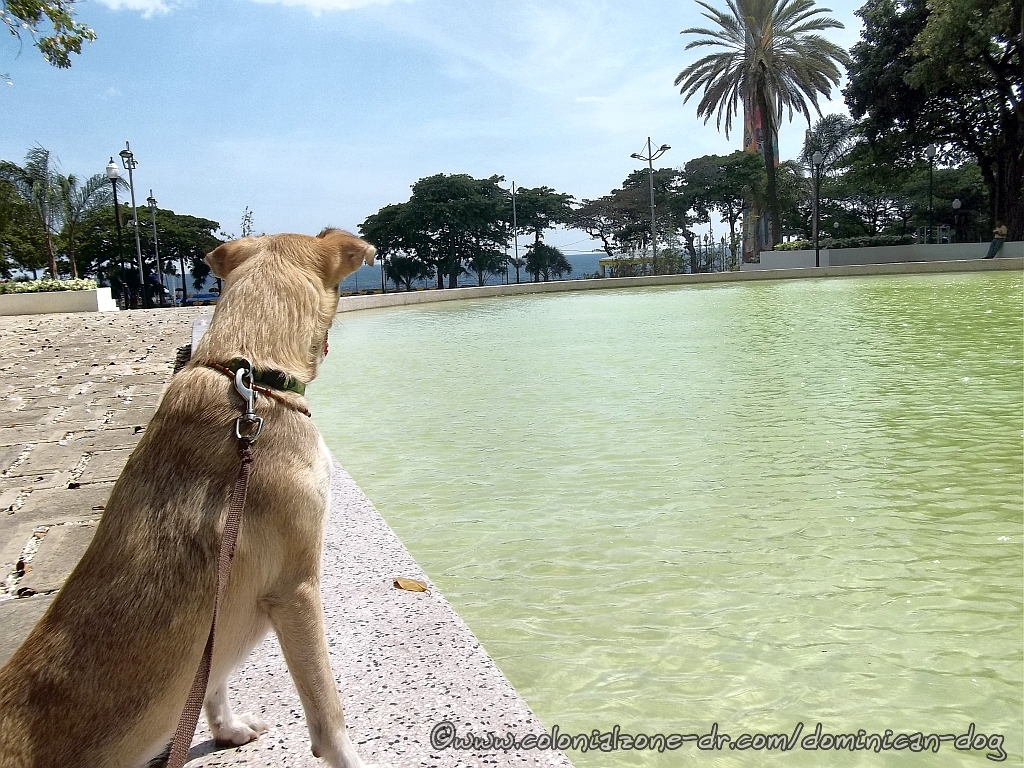 Buenagente taking time to reflect at the reflecting pool t the Eugenio María de Hostos Park