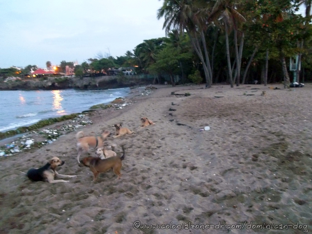 Telis friends at  Playita Montecion. Teli, Buenagente, Bruiser, Julio, Ojo, Mia, Lady all enjoying.