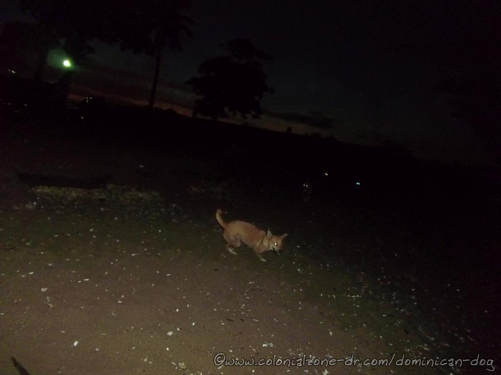 Playita Montecinos. Dogs eyes glowing at 5:50AM