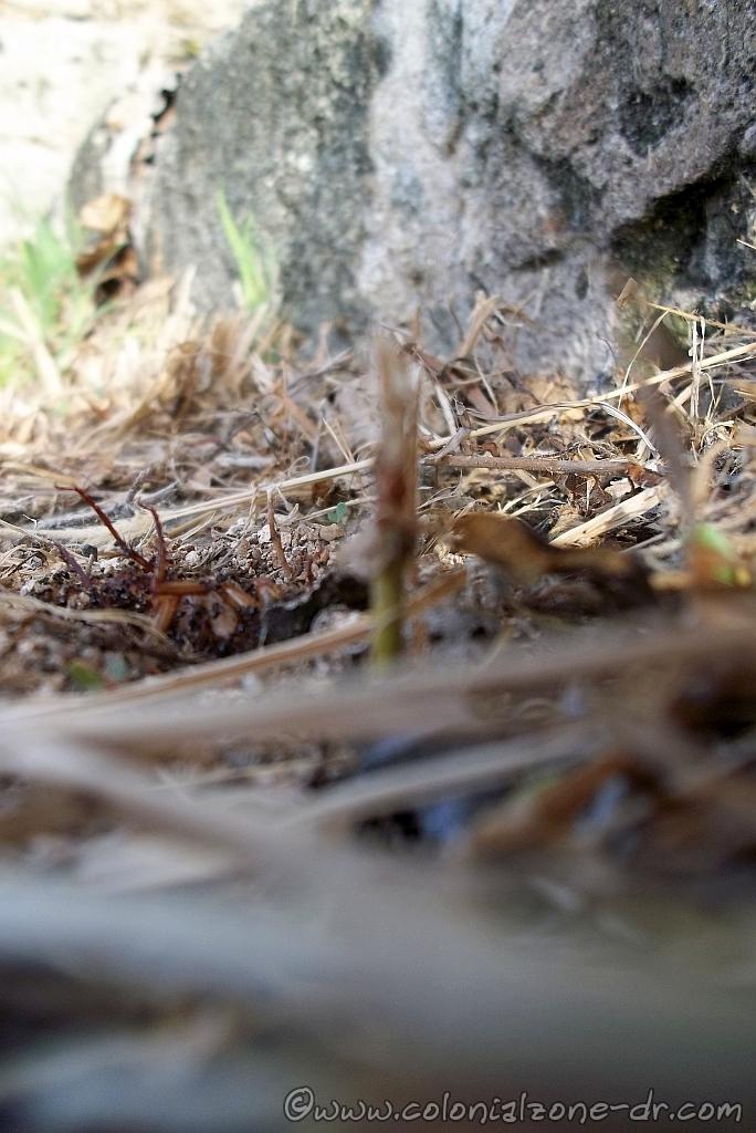Ants dining on the Cucaracha