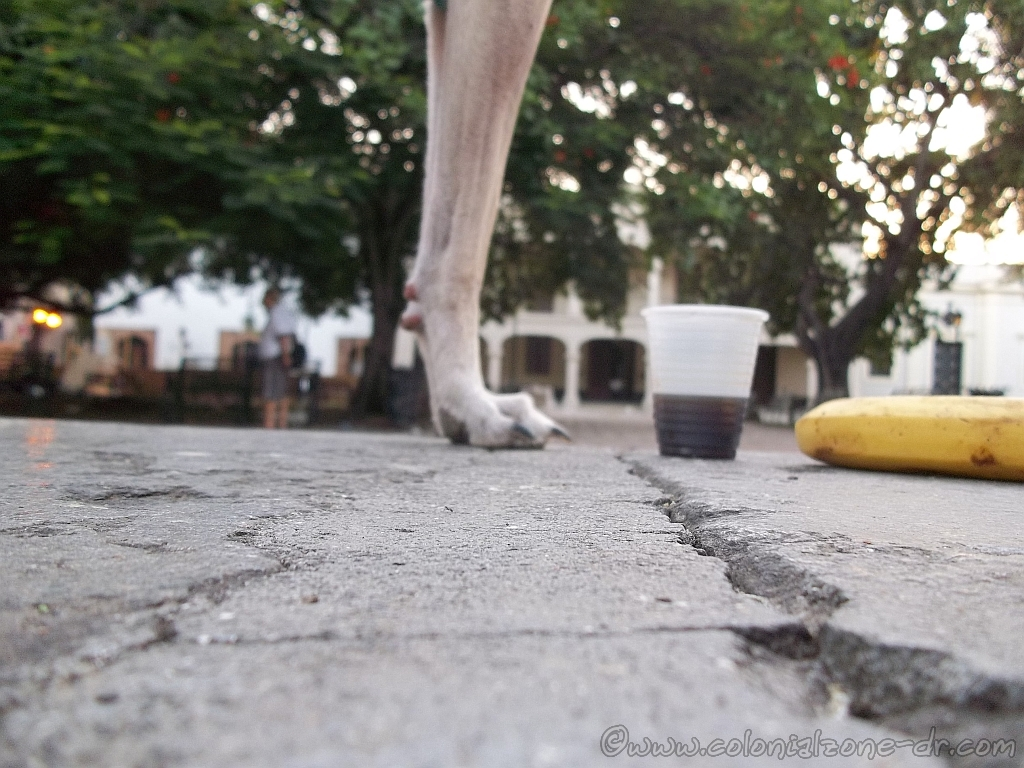 My Teli, my coffee and my banana in Parque Colon