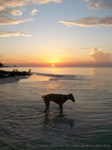 Teli getting her toes wet as the sun rises over Juan Dolio and the Caribbean Sea.