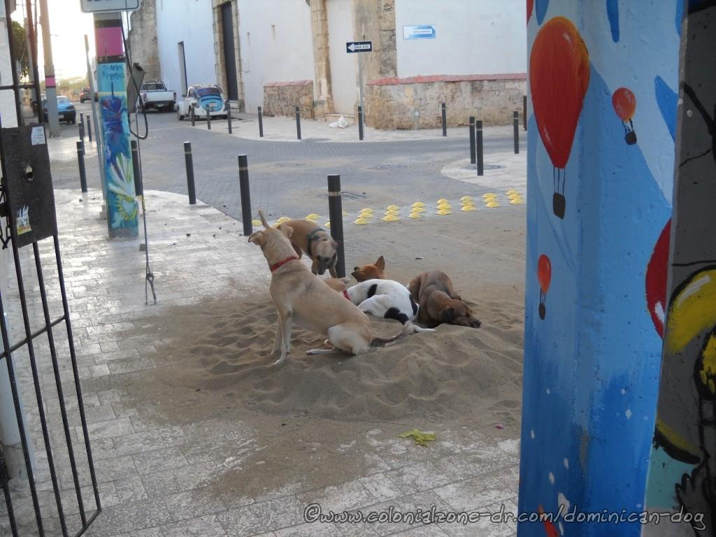 Teli, Buenagente, Zippy, Beza and Julio playing in the sand pile.