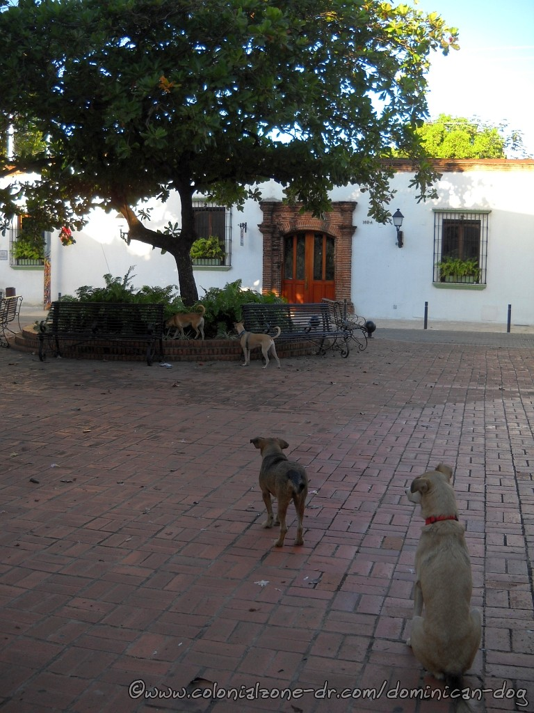 Dogs playing at Plazoleta Padre Billini