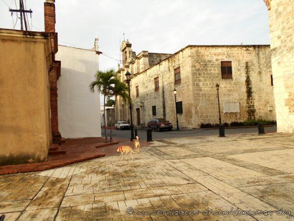 The Dominican Dogs in the Plaza Reloj de Sol