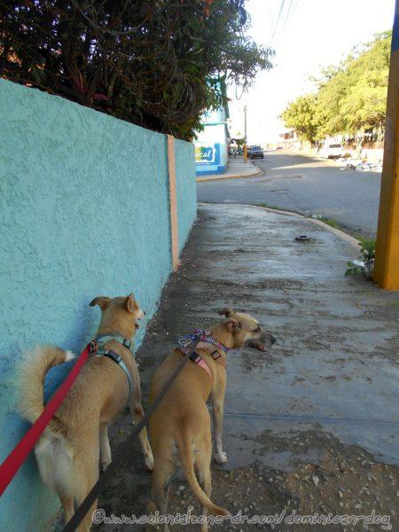 Buenagente and Inteliperra walking down Avenida España, Villa Duarte.