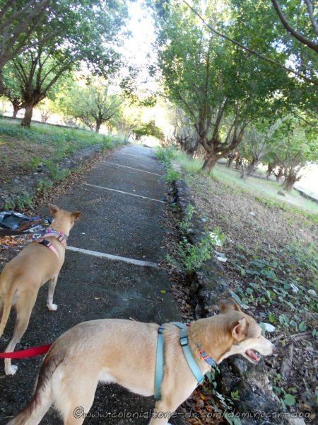 Buenagente and Inteliperra enjoying the shaded walkways  surrounding the Faro A Colón on Calle Mirador del Este.