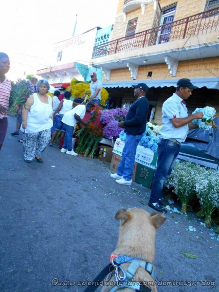 Buenagente was checking out all the humans at the flower market at Mercado Modelo.