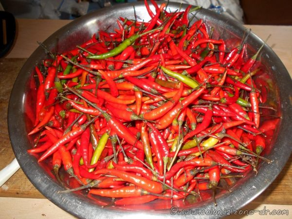 My chili peppers I bought at Mercado Barrio China.