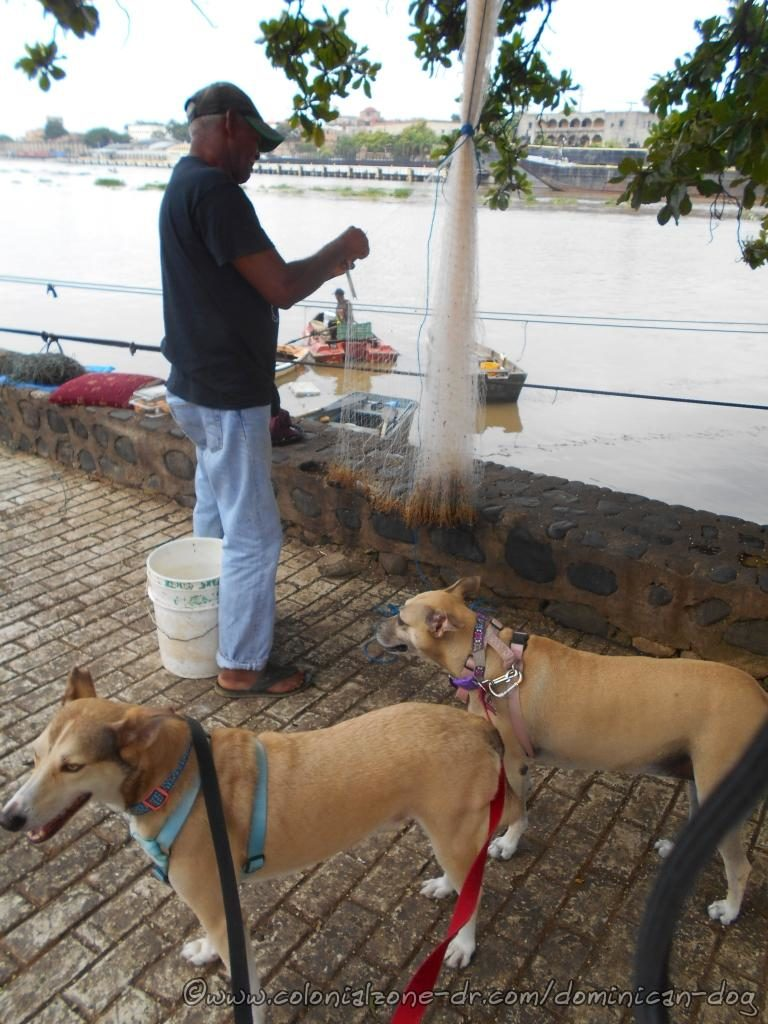 Buenagente and Inteliperra visiting their fisherman friend as he repairs his nets on Rio Ozama
