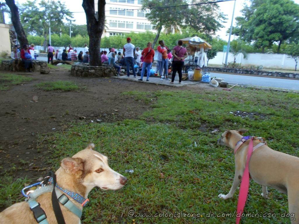 Parque San Souci with Buenagente and Inteliperra. People waiting to enter the Plan de Asistencia Social de la Presidencia