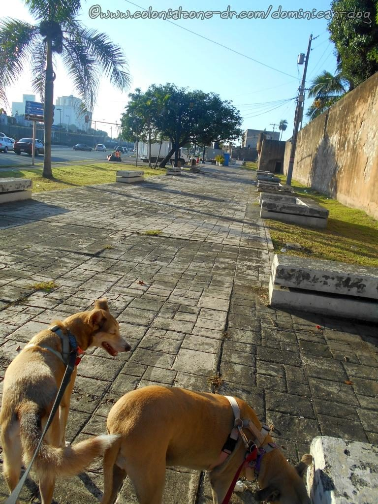 Buenagente and Inteliperra have to stop and do some sniffing at the wall of Fuerte Carina