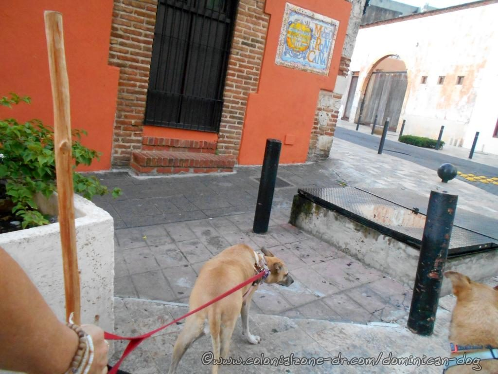 Inteliperra and Buenagente are passing the Museo Ron Y Caña and the entrance to the culverts