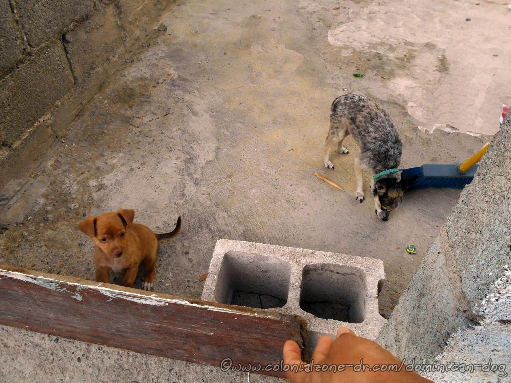 The chihuahua and puppy live in Pensador and they enjoy a treaty.