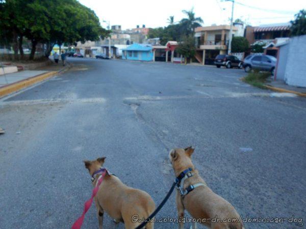Inteliperra and Buenagente on Calle Olegaro Vargas to head back home to Los Molinos