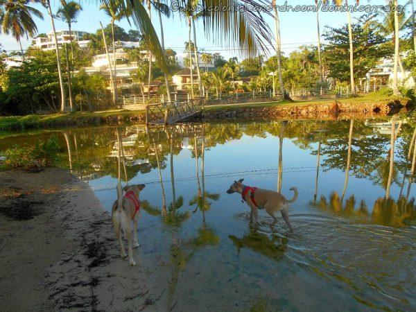 Playa Ballenas, Spoon Beach, Las Terrenas, Dominican Republic.