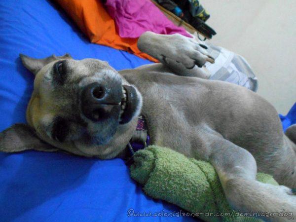 Inteliperra sleeping and smiling.