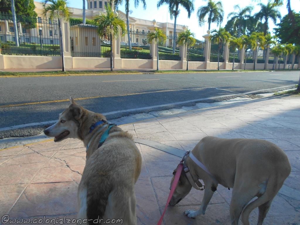 Inteliperra and Buenagente walking down Calle Moisés García at the front of the Palacio Nacional.