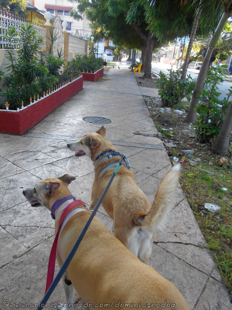 Inteliperra and Buenagente strolling down Av. Bolívar