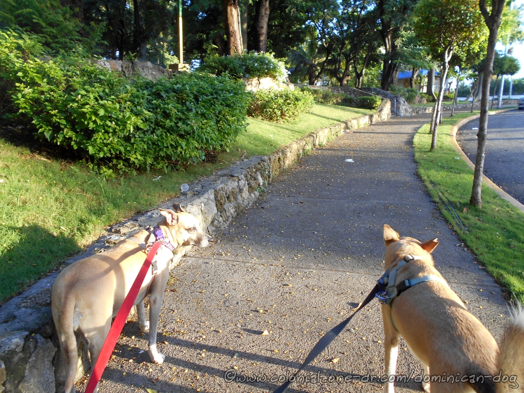Inteliperra and Buenagente on the sidewalk of Parque San Souci after the big Pitirre Baby Rescue. It was a good day.